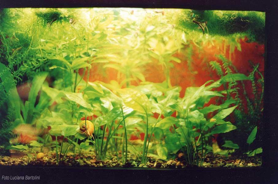 Acquario tropicale realizzato in un deposito per l 39 acqua for Acqua acquario