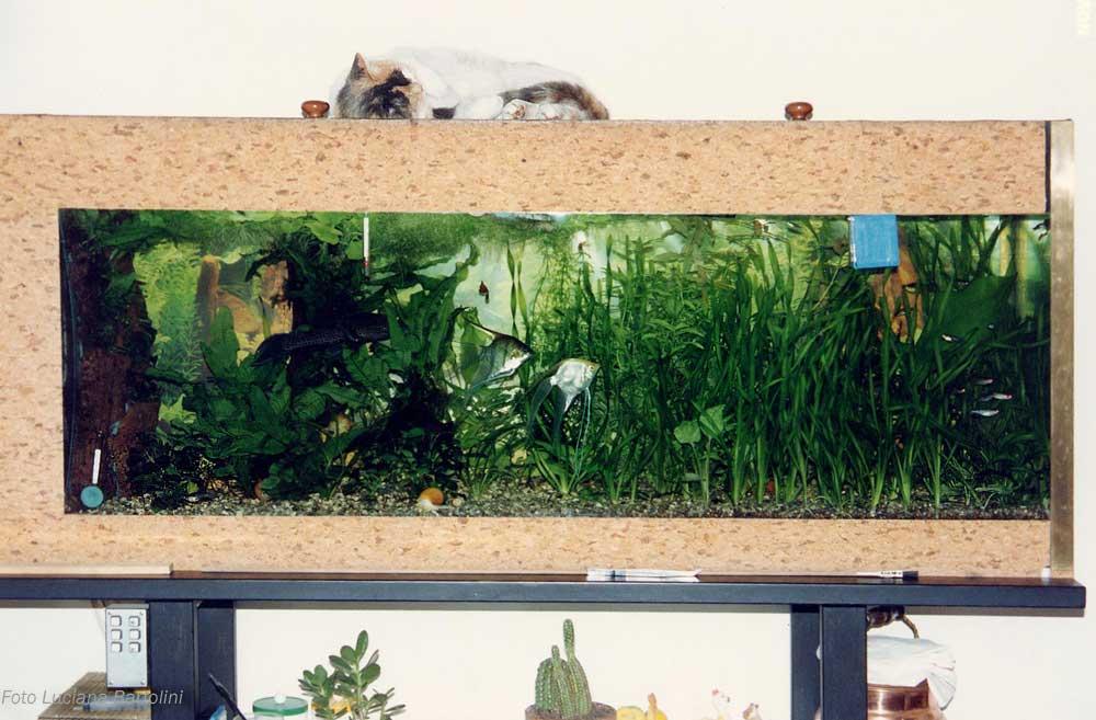 Acquario e gatti for Acquario per pesci rossi usato