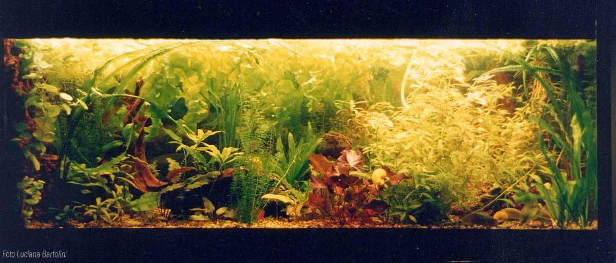 Acquario tropicale for Piante acquario