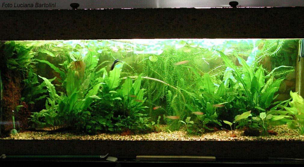 Acquario tropicale for Piscina per pesci rossi