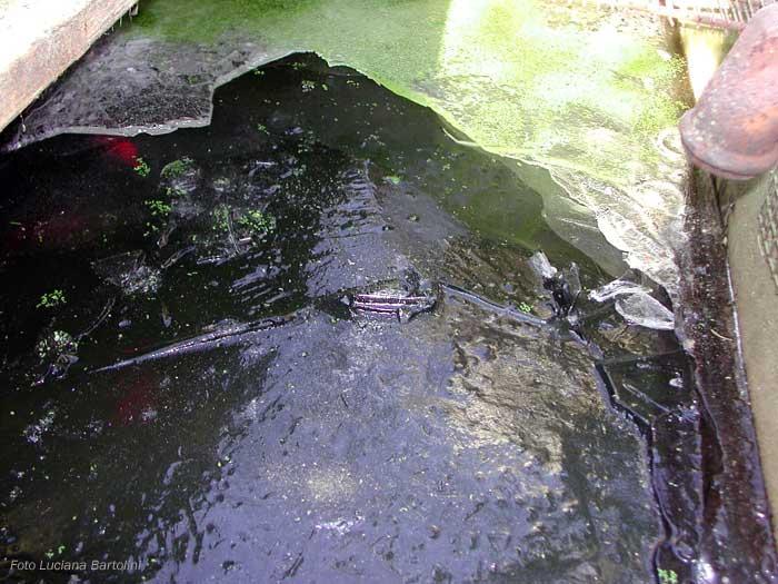 Vasca Da Esterno Pesci : Vasca per pesci rossi all aperto