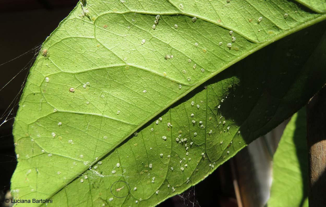 Insetti dannosi per le piante, i parassiti più comuni