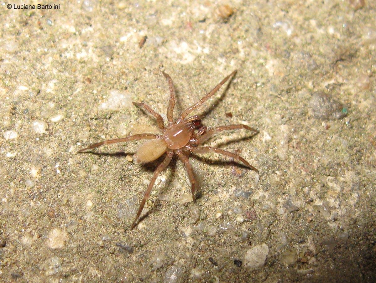 Piccoli e giovani ragni - Piccoli insetti in casa ...